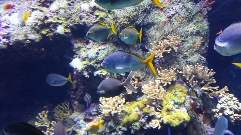 corallini-cervo-montecarlo-acquario
