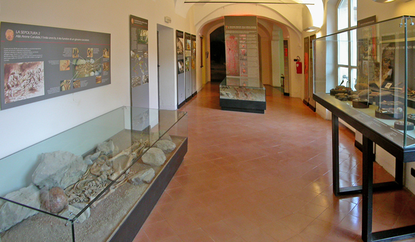 corallini-cervo-museo-archeolocigo-finale-paleolitico